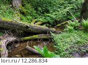 Купить «Old forest», фото № 12286834, снято 19 сентября 2019 г. (c) PantherMedia / Фотобанк Лори
