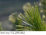 Купить «light plant bright flora shine», фото № 12299462, снято 23 февраля 2019 г. (c) PantherMedia / Фотобанк Лори