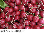 Купить «radishes on the market», фото № 12310834, снято 19 сентября 2019 г. (c) PantherMedia / Фотобанк Лори