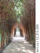 Купить «path in the park with dense trees», фото № 12313390, снято 14 июля 2020 г. (c) PantherMedia / Фотобанк Лори