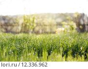 Купить «garden with grass», фото № 12336962, снято 23 февраля 2019 г. (c) PantherMedia / Фотобанк Лори