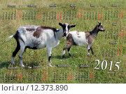 Купить «calendar for 2015 year with goat and kid», фото № 12373890, снято 19 марта 2019 г. (c) PantherMedia / Фотобанк Лори