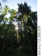 Купить «forest sunlight conifer refraction wood», фото № 12390870, снято 18 ноября 2018 г. (c) PantherMedia / Фотобанк Лори