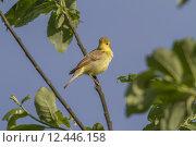 Купить «nature air fly flying plumage», фото № 12446158, снято 19 октября 2019 г. (c) PantherMedia / Фотобанк Лори