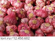 Купить «garlic allium sativum knoblauchknolle knoblauchzwiebel», фото № 12450602, снято 24 июня 2019 г. (c) PantherMedia / Фотобанк Лори