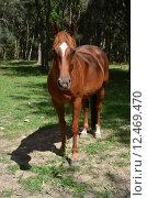 Купить «horse ride fox gelding weiss», фото № 12469470, снято 21 марта 2019 г. (c) PantherMedia / Фотобанк Лори
