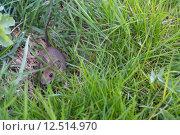 Купить «looking view look mouse see», фото № 12514970, снято 27 марта 2019 г. (c) PantherMedia / Фотобанк Лори