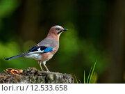 Купить «green animal wood wild wildlife», фото № 12533658, снято 19 февраля 2019 г. (c) PantherMedia / Фотобанк Лори