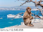 Купить «animal wild mammal monkey primate», фото № 12540658, снято 19 февраля 2019 г. (c) PantherMedia / Фотобанк Лори