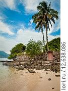 Пальмы на пляже. Стоковое фото, фотограф Anya Stogova / Фотобанк Лори