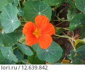 Красный цветок. Стоковое фото, фотограф Светлана Колотухина / Фотобанк Лори