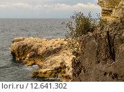 Купить «Трава на скале на выходе к морю из левой паттерны 35-й батареи, Севастополь, Крым», фото № 12641302, снято 14 июля 2015 г. (c) Ивашков Александр / Фотобанк Лори