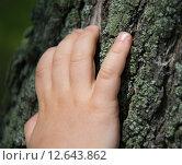 Рука ребенка на коре дерева. Стоковое фото, фотограф Алла Черкасова / Фотобанк Лори