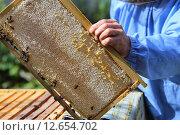 Рамка наполнена медом и залеплена воском. Стоковое фото, фотограф Анатолий Матвейчук / Фотобанк Лори