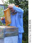 Сметание пчел с рамки (2015 год). Редакционное фото, фотограф Анатолий Матвейчук / Фотобанк Лори