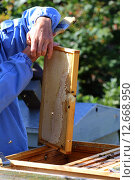 Рамка с медом. Стоковое фото, фотограф Анатолий Матвейчук / Фотобанк Лори
