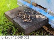 Пчелы выложили из улья помор. Стоковое фото, фотограф Анатолий Матвейчук / Фотобанк Лори