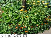 Купить «Оформление приствольного круга цветами», эксклюзивное фото № 12673878, снято 25 июля 2015 г. (c) Елена Коромыслова / Фотобанк Лори
