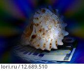 Морская раковина и банкноты евро. Стоковое фото, фотограф Наталья Буравлева / Фотобанк Лори