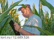 Фермер с планшетом на поле кукурузы. Стоковое фото, фотограф Александр Власик / Фотобанк Лори