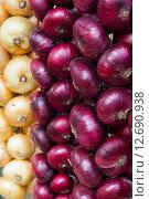 Красный и белый лук. Стоковое фото, фотограф Елена Поминова / Фотобанк Лори