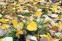 Осенние листья с каплями дождя, фото № 12694774, снято 13 сентября 2015 г. (c) Алексей Маринченко / Фотобанк Лори