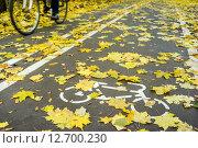 Велосипедист в движении на велосипедной дорожке, усыпанной осенними листьями. Стоковое фото, фотограф Максим Блинков / Фотобанк Лори