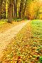 Парк осенью. Опавшие листья - Осенний пейзаж, фото № 12714622, снято 23 февраля 2017 г. (c) Зезелина Марина / Фотобанк Лори