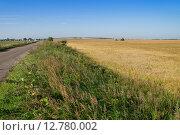 Край колхозного поля. Стоковое фото, фотограф Аркадий Рыпин / Фотобанк Лори