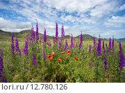 Весенние полевые цветы на фоне гор. Стоковое фото, фотограф Алексей Маринченко / Фотобанк Лори