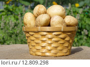 Купить «Свежий картофель в корзине на улице», эксклюзивное фото № 12809298, снято 3 августа 2015 г. (c) Елена Коромыслова / Фотобанк Лори