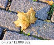 Купить «Кленовый лист», фото № 12809882, снято 25 сентября 2015 г. (c) Алексей Ларионов / Фотобанк Лори