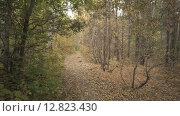 Лес осенью. Стоковое видео, видеограф Рамиль Бакиров / Фотобанк Лори