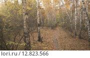 Прогулка по осеннему лесу. Стоковое видео, видеограф Рамиль Бакиров / Фотобанк Лори