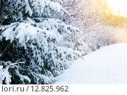 Закат в зимнем лесу. Стоковое фото, фотограф Mariya L / Фотобанк Лори