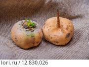 Купить «Turnips», фото № 12830026, снято 24 сентября 2015 г. (c) Алёшина Оксана / Фотобанк Лори