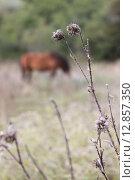 Чертополох и лошадь. Стоковое фото, фотограф Татьяна Иванова / Фотобанк Лори