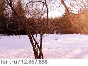 Японский сад в солнечный зимний вечер, покрытый снегом с павильоном на заднем плане. Стоковое фото, фотограф Людмила Герасимова / Фотобанк Лори