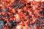 Красивый костёр с яркими раскалёнными углями, фото № 12869498, снято 3 октября 2015 г. (c) Алексей Маринченко / Фотобанк Лори