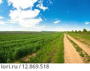 Посевы озимой пшеницы. Стоковое фото, фотограф Кононенко Александр / Фотобанк Лори