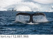 Купить «Хвост горбатого кита», фото № 12881966, снято 17 января 2015 г. (c) Vladimir / Фотобанк Лори
