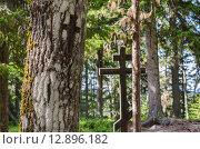 Купить «Лагерное кладбище на Секирной горе. Вырезанный крест. Россия, Соловецкие острова», фото № 12896182, снято 6 августа 2015 г. (c) Яковлев Сергей / Фотобанк Лори