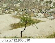 Молодое зеленое дерево на фоне горной деревни. Стоковое фото, фотограф Елена Антипина / Фотобанк Лори