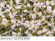 Маш проростки семян. Стоковое фото, фотограф Карташов Евгений / Фотобанк Лори