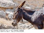 Купить «Ослик. Линдос, Родос, Греция», фото № 12916058, снято 9 июля 2015 г. (c) Andrei Nekrassov / Фотобанк Лори