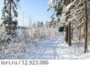 Купить «Заснеженный лес в солнечный день», эксклюзивное фото № 12923086, снято 18 января 2014 г. (c) Елена Коромыслова / Фотобанк Лори