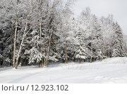 Купить «Зимний лес после снегопада», эксклюзивное фото № 12923102, снято 2 марта 2013 г. (c) Елена Коромыслова / Фотобанк Лори