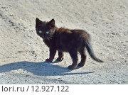 Купить «Бездомный котенок на улице», фото № 12927122, снято 21 января 2019 г. (c) Овчинникова Ирина / Фотобанк Лори