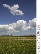 Купить «green tree grass trees meadow», фото № 12936286, снято 23 марта 2019 г. (c) PantherMedia / Фотобанк Лори