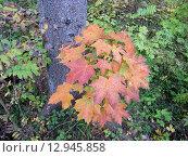 Здравствуй, осень! Стоковое фото, фотограф Лидия Хвесюк / Фотобанк Лори